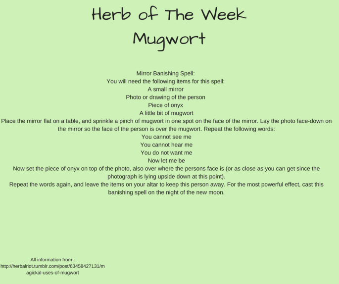 Herb of The WeekMugwort (1)