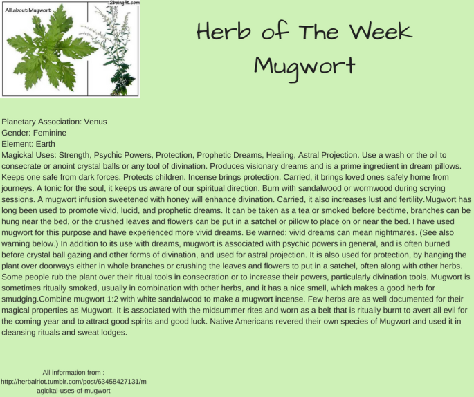 Herb of The WeekMugwort