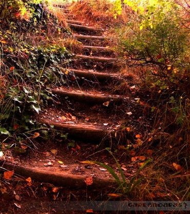 colors-fall-leaves-nature-stairs-Favim.com-68657